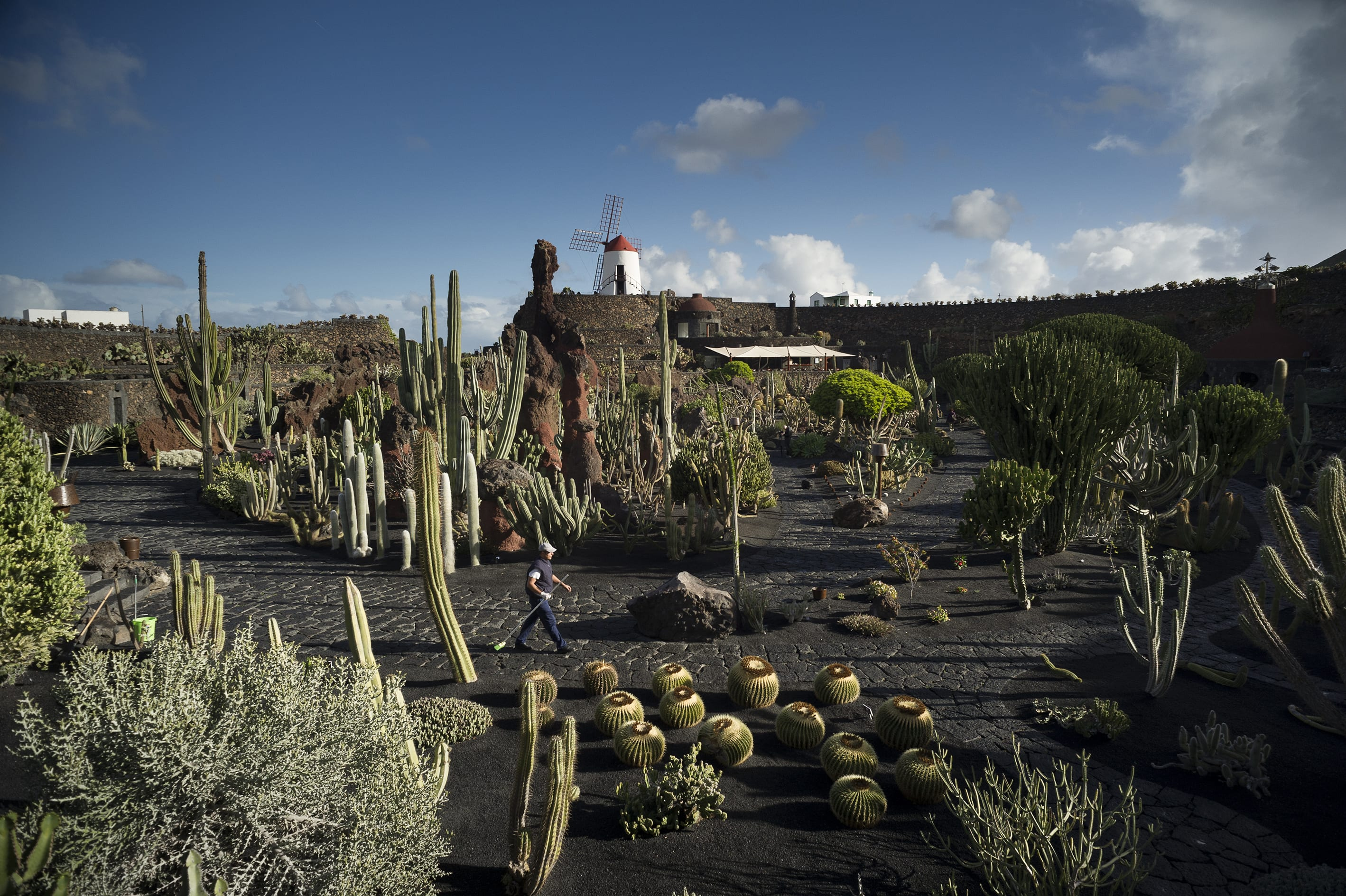 Cesar Manrique Andrea Rizza Goldstein Jardin De Cactus Divisare Images, Photos, Reviews