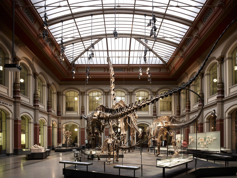 Diener & Diener Architekten · The Museum of Natural History · Divisare